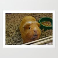 guinea pig Art Prints featuring Guinea Pig by a person