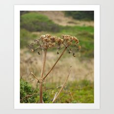 Navaro Bluffs, fall flowers V Art Print