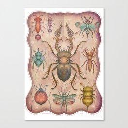 Entomology Tab. I Canvas Print