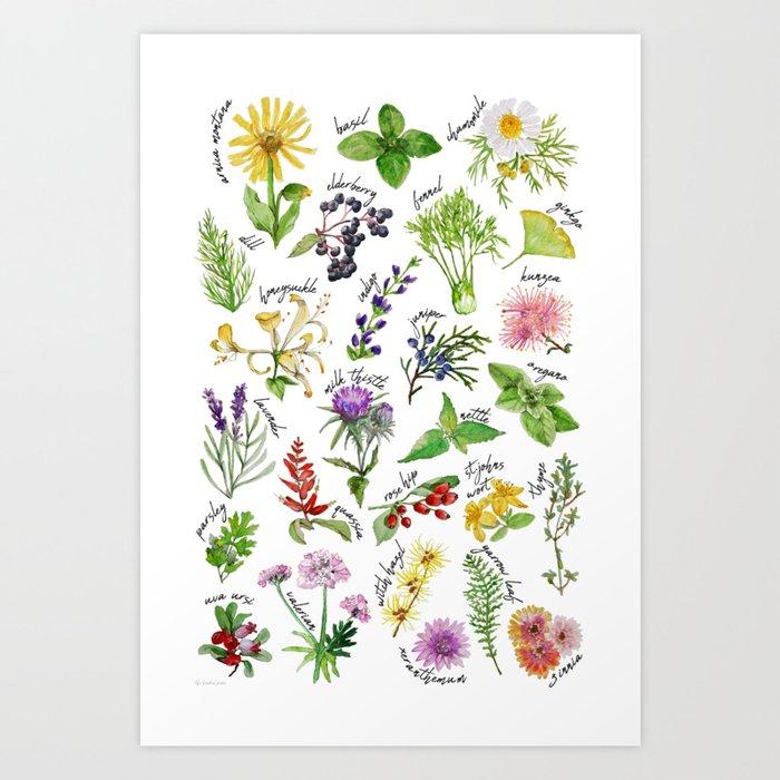Plants Herbs Alphabet Art Print By Thekindredpines Society6