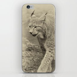beautiful lynx iPhone Skin