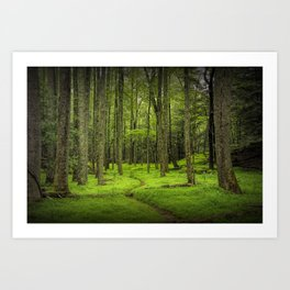 A Woodland Path in Cades Cove Art Print