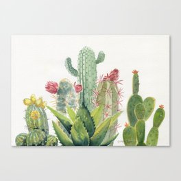 Cactus Watercolor Canvas Print