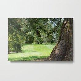 Tree in the Park Metal Print