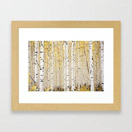 Aspen Trunks Framed Art Print