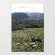 Sheepscape Canvas Print