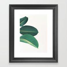 Rubber Fig Leaves II Framed Art Print