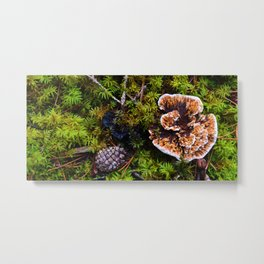 Understory of an Old Growth Lodgepole Pine Forest in Jasper National Park, Canada Metal Print