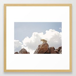 mountain goat Framed Art Print