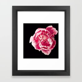 Pink Tulip Flower On A Black Background #decor #society6 #homedecor Framed Art Print