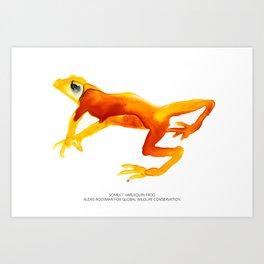 Scarlet Harlequin Frog Art Print