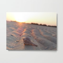 Seashell Metal Print