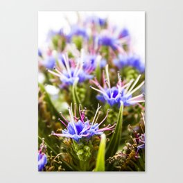 Pink & purple detail Canvas Print