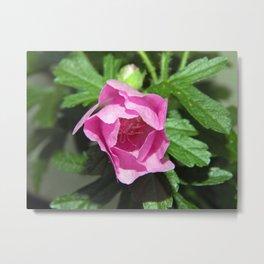 Musk Mallow - Pretty Pink Flower Metal Print