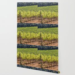 Vineyard of red grapes in a wood on the island of Porquerolles Wallpaper