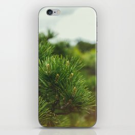 Pine Branch iPhone Skin