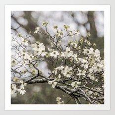 Spring Botanical -- White Dogwood, 2016 Art Print