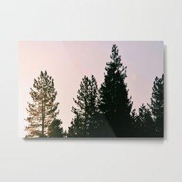 Trees in Morning Light Metal Print
