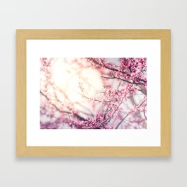 Flower Sunrise Framed Art Print