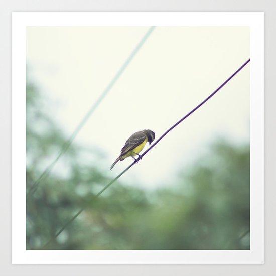 Little Bird Up Art Print