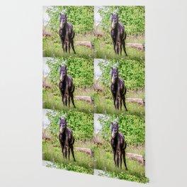 Dark bay horse Wallpaper