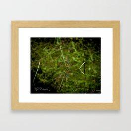 Just A Reflection Framed Art Print