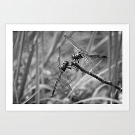 Dragonflies at Rest Art Print