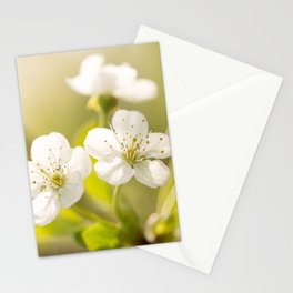 Beautiful cherry blossom on a vivid green background - summer atmosphere Stationery Cards