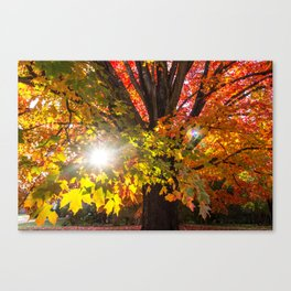 Fall Foliage - Chester, Virginia Canvas Print