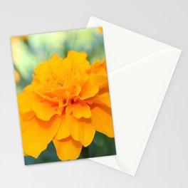Sunny Delight Stationery Cards