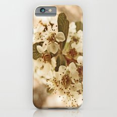 white blossoms on a tree. iPhone 6s Slim Case