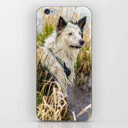 Welsh Boarder Collie iPhone Skin