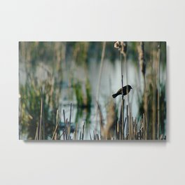 Bird In The Cattails Metal Print