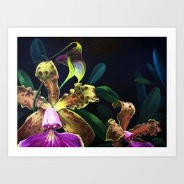 Orchid Blooms Art Print