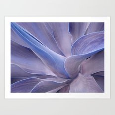 Shades of Lilac Agave Attenuata  Art Print