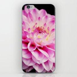 Close up pink dahlia iPhone Skin