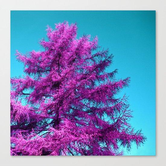 purple fir - tree I Canvas Print