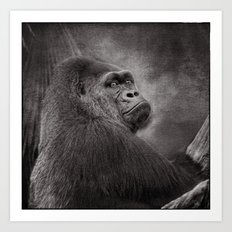 Gorilla. Silverback. BN Art Print