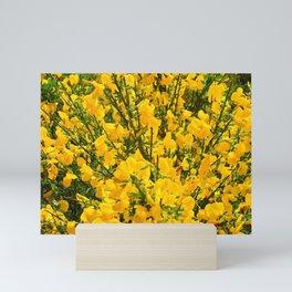 Golden Bliss, scotch broom, wildflowers of the Pacific Northwest Mini Art Print