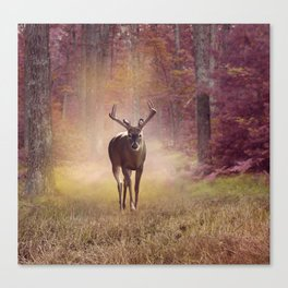 Male Deer in autumn forest Canvas Print