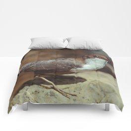 Rusty Comforters