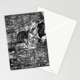 Into the Wilderness - Black & White Stationery Cards