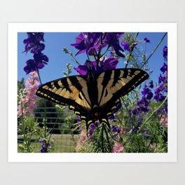 Swallowtail 2 Art Print