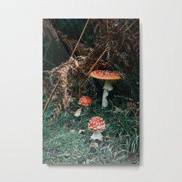 Toad Stalls Metal Print