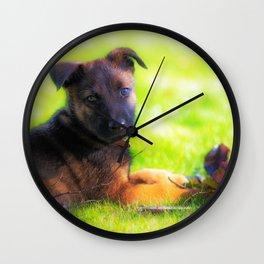 Hollandse herdershond puppy 8 weeks old Wall Clock