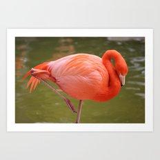 Flamingo! Art Print