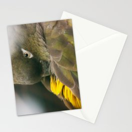 Burrowing Parrot Stationery Cards