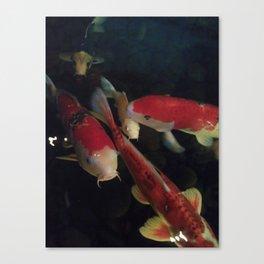 Koi1 Canvas Print