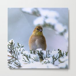 Is This Heaven? (American Goldfinch) Metal Print