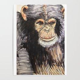 Chimpanzee Guy Poster